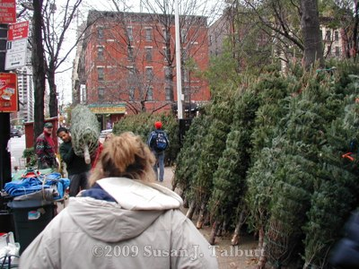 [Christmas trees for sale in Manhattan.]